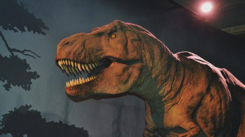 Rodzinny weekend w parku dinozaurów