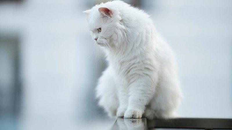 Zabezpieczająca siatka dla kota – kiedy warto