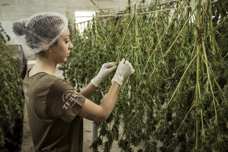 Zadbajmy o oświetlenie w hodowli marihuany