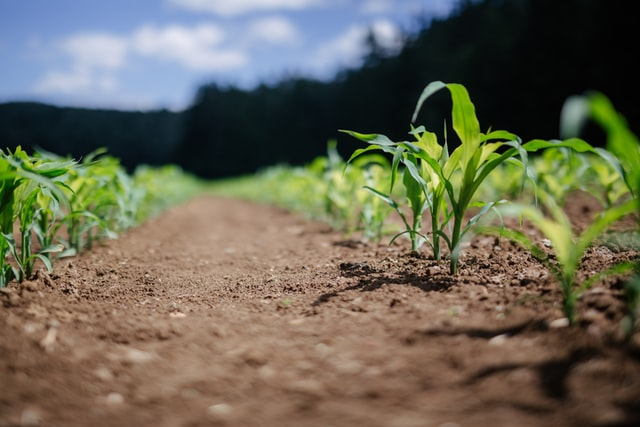Efektywnie realizowana ochrona roślin